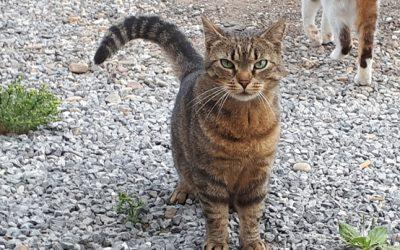 Lezing: Help, wat zegt mijn kat?